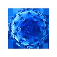 逆转录病毒包装/逆转录病毒载体/Retrovirus
