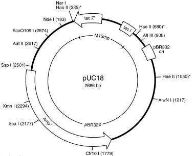pUC18载体,大肠系列质粒