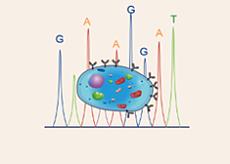 单克隆抗体细胞株测序
