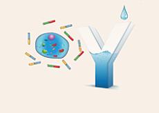 重组抗体表达