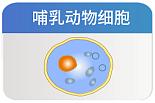 瞬时转染细胞 pMZ-X3 高表达体系多信号肽选择