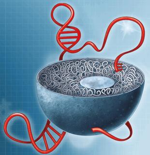LncRNA测序