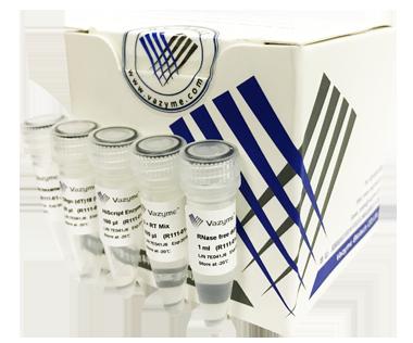 【正品直销,售后保障】(RT-Kit/逆转录第一链合成)HiScript 1st Strand cDNA Synthesis Kit