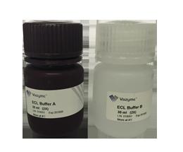 【正品直销,售后保障】增强型ECL化学发光检测试剂盒
