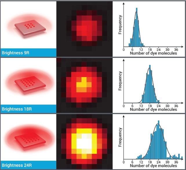 显微镜亮度灵敏度标尺