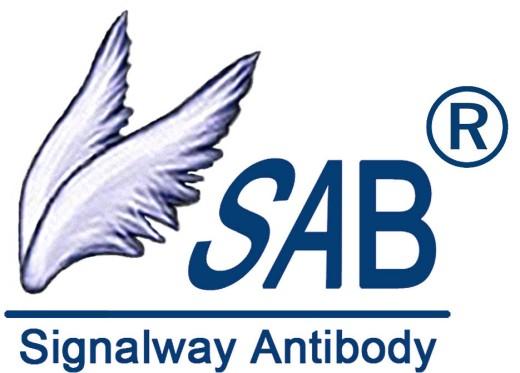 NEB Antibody