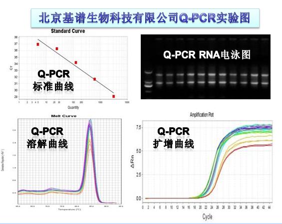 88必发com_荧光定量PCR(Q-PCR)mRNA,lncRNA,miRNA,circRNA,DNA定量