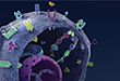 「CSCO 2017」罗氏制药将发布多项重磅研究结果