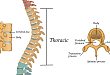 10 分钟掌握脊柱的骨肿瘤影像