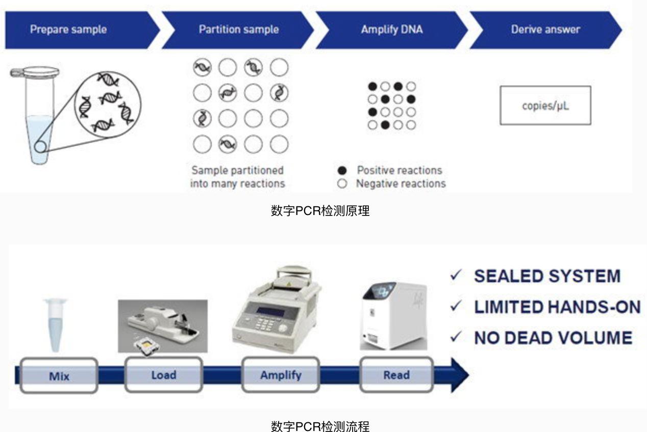 数字PCR (ddPCR)