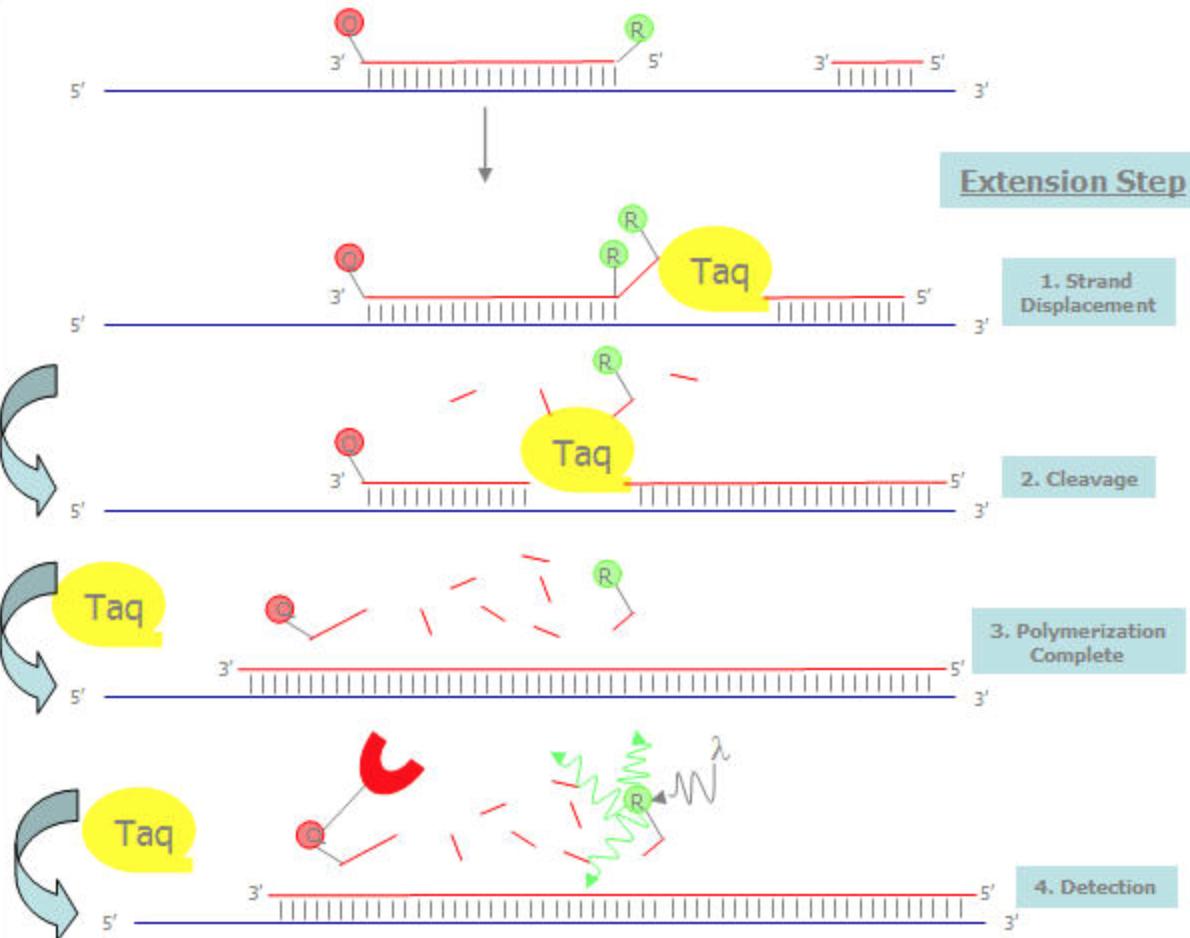 实时荧光定量PCR/qPCR