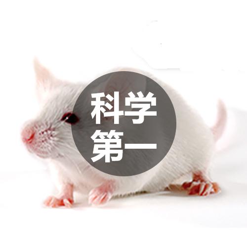 人类疾病动物模型构建