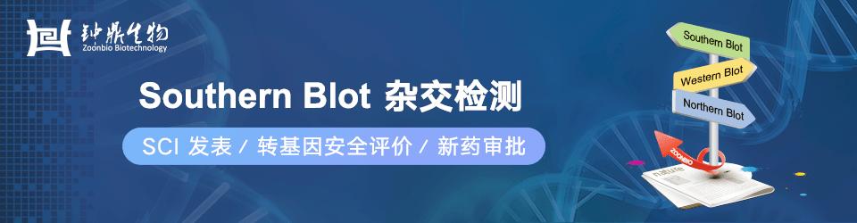 钟鼎:Southern Blot 杂交检测系列服务