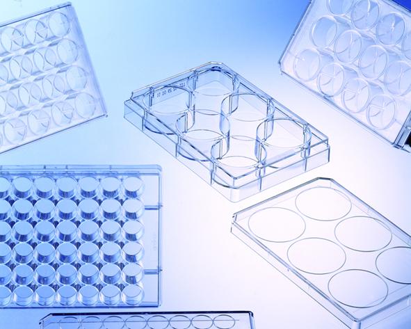 多孔细胞培养板,6孔,12孔,24孔,48孔