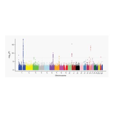 基因芯片数据分析服务