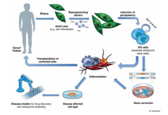 iPS细胞定向分化