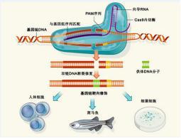 88必发娱乐最新网址_CRISPR-CAS9基因编辑