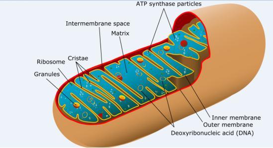 ATP含量检测