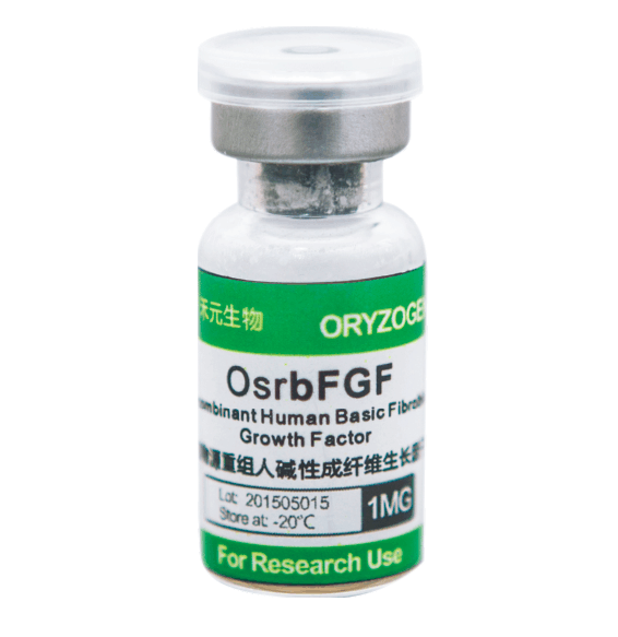 重组人碱性成纤维细胞生长因子OsrbFGF
