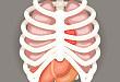 肋软骨损伤:X 线失手,超声顶起