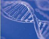 StarSpin Animal DNA Kit