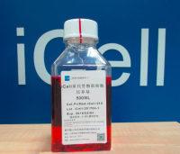 iCell原代骨骼肌细胞培养体系