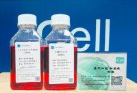 PATU-8988/人胰腺癌细胞/ATCC/送STR