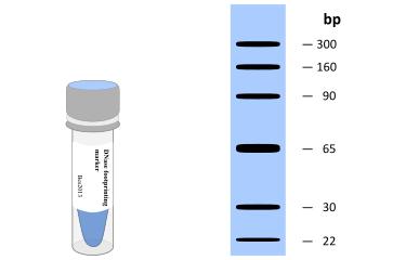 DNase footprinting Marker-Biotin