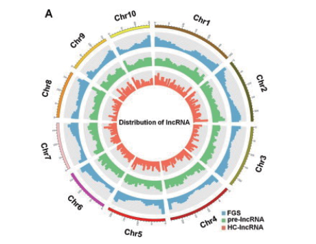 LncRNA测序及信息分析