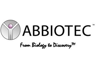 BMX (1C6) Antibody