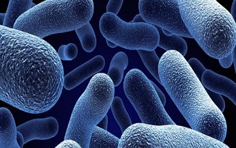 胚胎干细胞体外培养与定向诱导分化