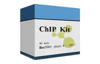 染色质免疫沉淀(ChIP)试剂盒