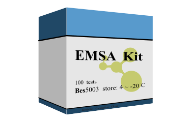 EMSA试剂盒