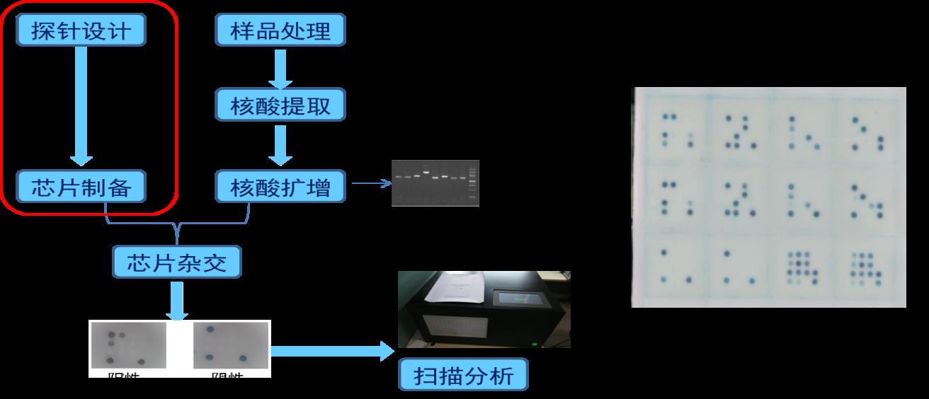 核酸合成(引物合成、探针合成、引物标记、探针修饰)基因合成(基因芯片定制、检测、项目开发)