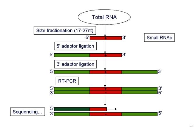 microRNA测序