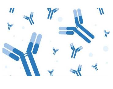 Anti-Gastric Inhibitory Peptide (3-42) (GIP (3-42)) Mouse monoclonal antibody