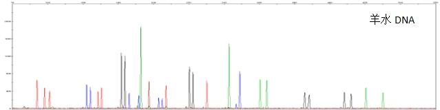 快速DNA提取试剂盒DNA-Direct Extraction kit
