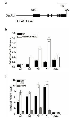 染色质免疫共沉淀(ChIP)
