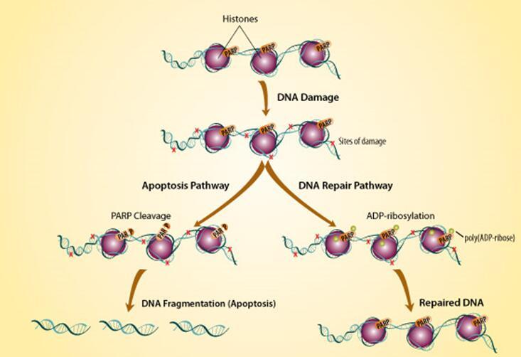 酶活力测定