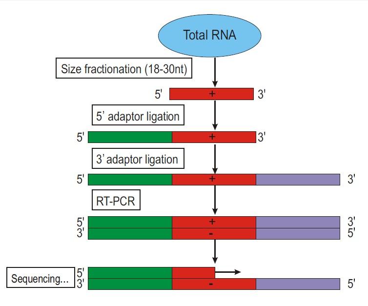 smallRNA/microRNA/cirRNA/LncRNA测序