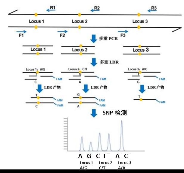 SNP/CNV/AFLP基因分型服务