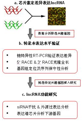 非编码RNA芯片服务