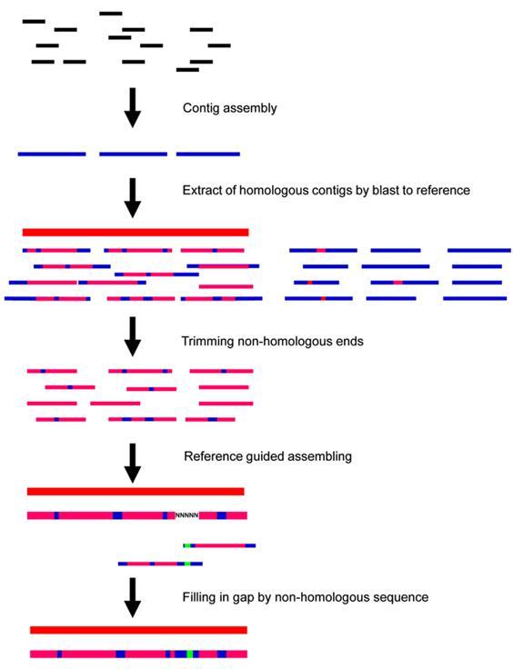 线粒体/叶绿体基因组测序