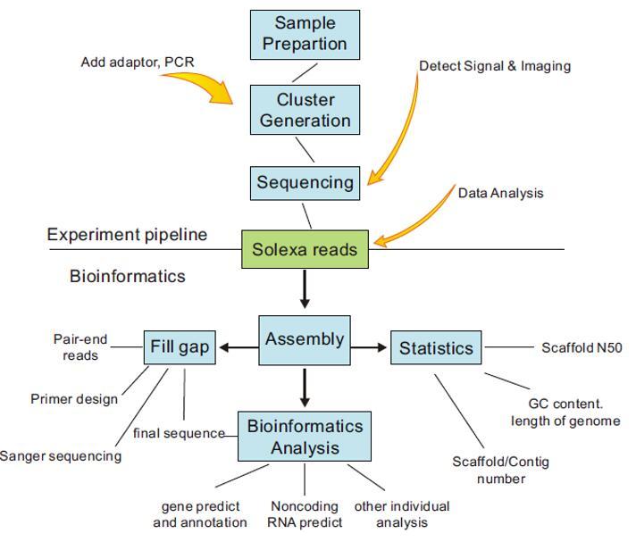 细菌基因组测序