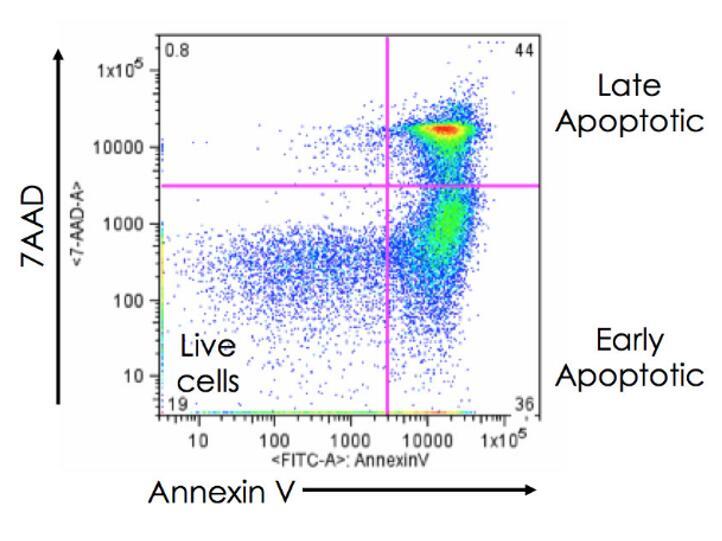 流式细胞凋亡研究应用