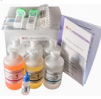 Hito Golgi-Cox OptimStain PreKit 高尔基染色试剂盒