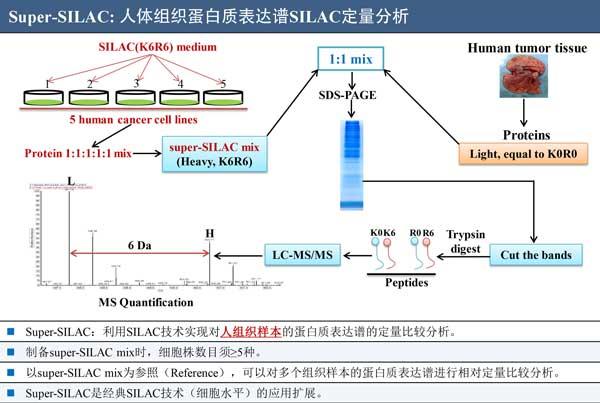 iTRAQ(TMT):定量蛋白质组分析服务