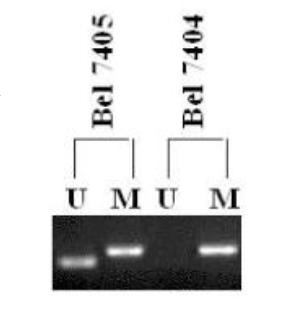 DNA CpG甲基化检测