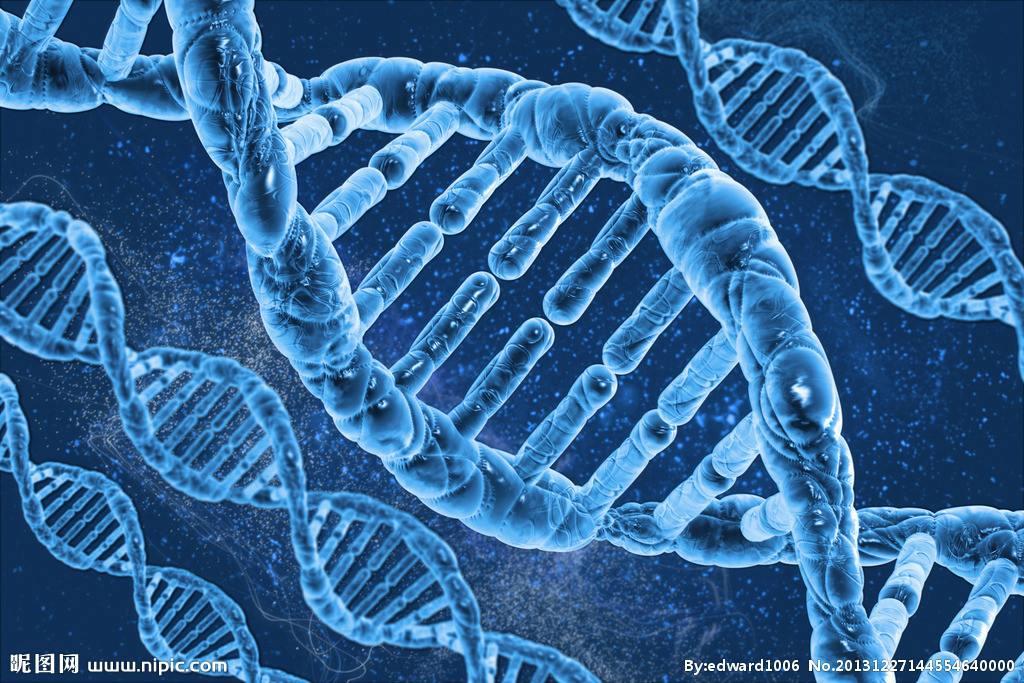 基因工程技术服务 天津兰瑞生物