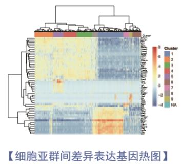 单细胞测序分析